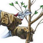 Обрезка вишни осенью схема для начинающих