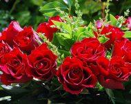 Осенняя обрезка роз и укрытие на зиму: видео
