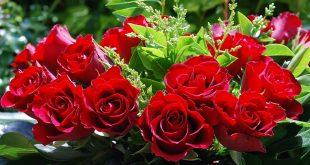 Осенняя обрезка роз и укрытие на зиму видео