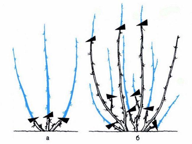 Обрезка крыжовника осенью схема для начинающих
