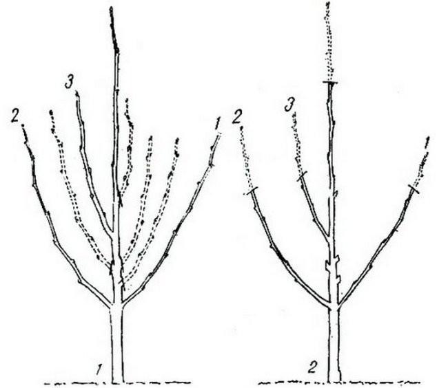 Осенняя обрезка плодовых деревьев и кустарников осенью в Подмосковье