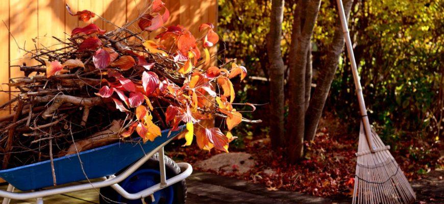Фазы луны в октябре 2019 года по дням для садоводов и огородников