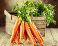 Морковь: посадка и уход в открытом грунте весной по лунному календарю